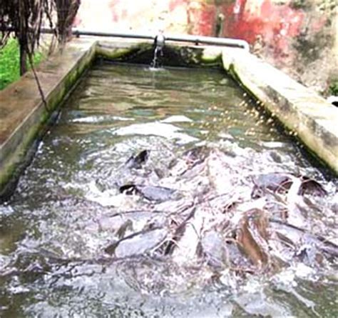 sle of a business plan on catfish farming fish farming agriculture nigeria