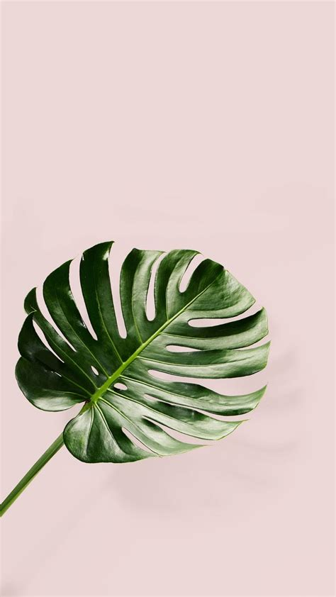wallpaper tropical green top 25 best iphone 6 wallpaper tumblr ideas on pinterest