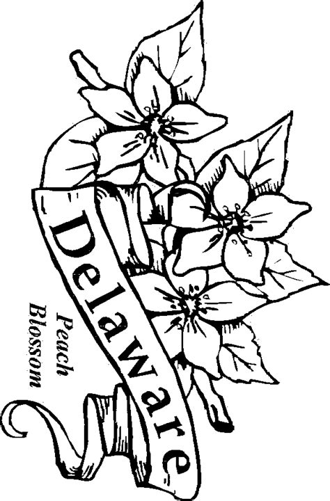 coloring pictures of state flowers california state coloring page