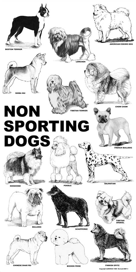 non sporting dogs aaronco poster non sporting dogs barkleigh store