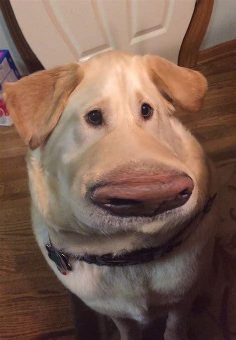 snapchat filter   dog   dug