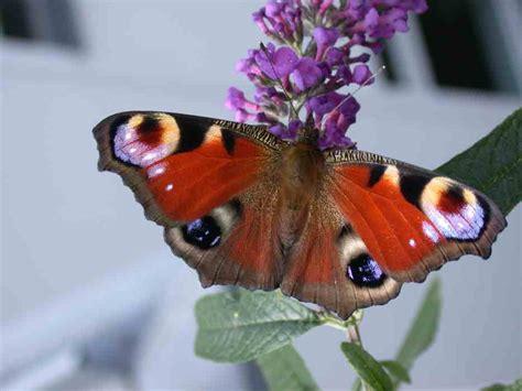 artenschutz insekten 220 bersicht