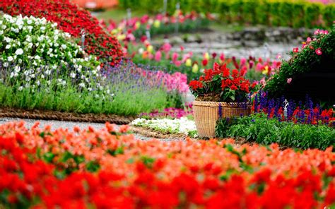flowers garden image flower garden backgrounds wallpaper cave