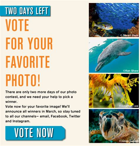 This Next Contest Only Two More Days by Only Two Days Left To Vote For Your Favorite Photo