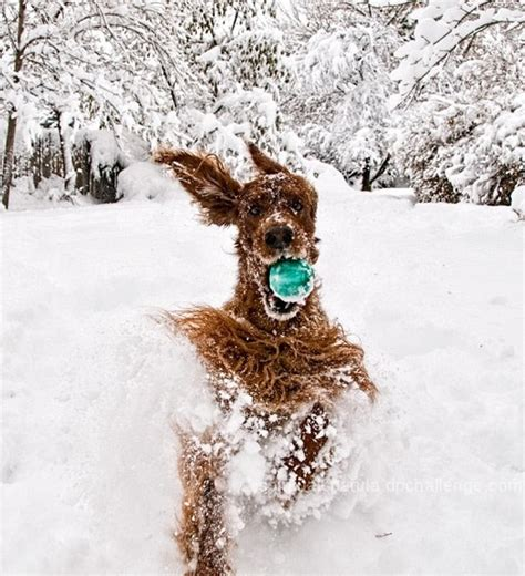 dogs in snow hilarious and heartwarming photos of dogs in snow my modern met