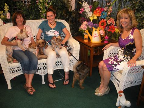 yorkie 911 rescue news