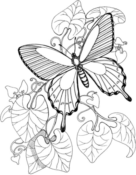 coloring pages butterfly garden 301 moved permanently