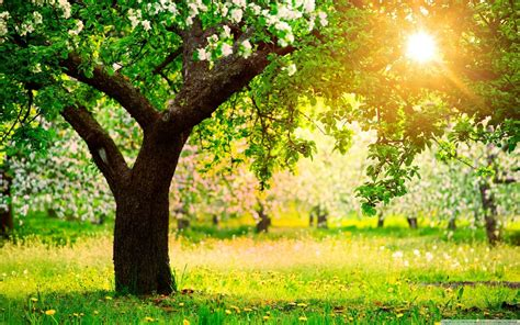 tree background hd photos early wallpaper 52 images