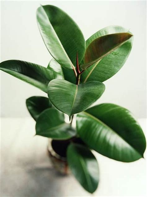 easiest indoor plants the easiest indoor house plants that won t die on you