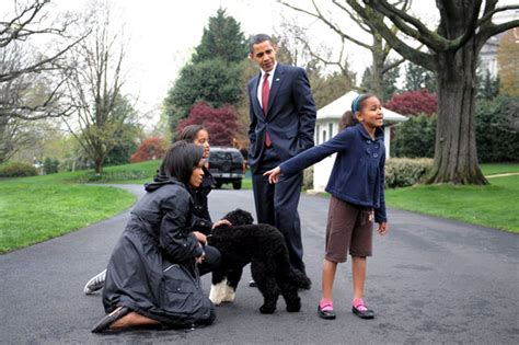 the family puppy obama family s new bo makes himself at home at white house us news the guardian