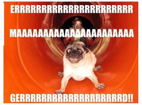 ermahgerd pug 575 best the ermahgerd berd images on ermahgerd meme animal funnies and
