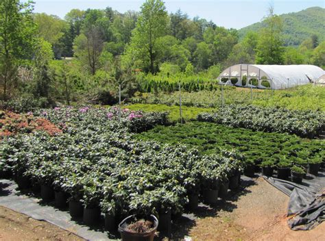 landscaping stores near me plant store near me 100 landscaping stores nc find out what is new at gardening