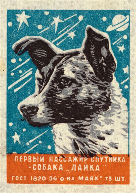 soviet space dogs laika and comrades the soviet space dogs who took leaps for mankind