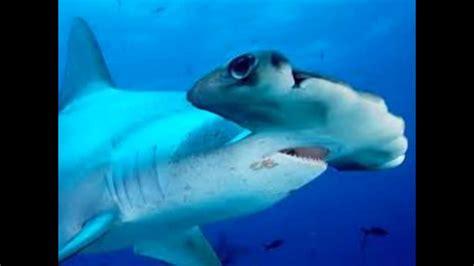 imagenes de unicornios marinos los animales marinos youtube