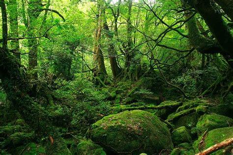 imagenes de bosques verdes parque nacional de bialowieza