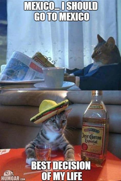 Funny Tequila Memes - newspaper cat i should go to mexico humoar com