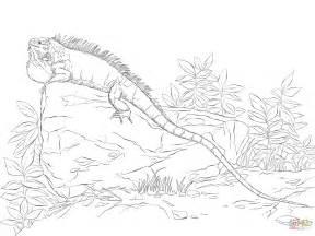 realisitc green iguana coloring page free printable