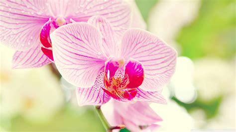 significato dei fiori orchidea significato fiori orchidea linguaggio dei fiori