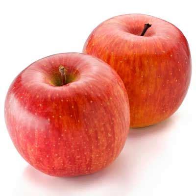 apple fuji dwarf fuji apple trees for sale brighter blooms nursery
