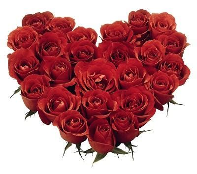 imagenes rosas enamorados cu 225 l es el significado de las rosas rojas 4 pasos