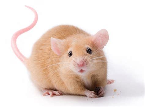 sympa la souris les explorateurs