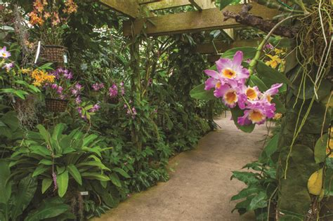selby botanical garden rominiecki 95 leads world renowned selby