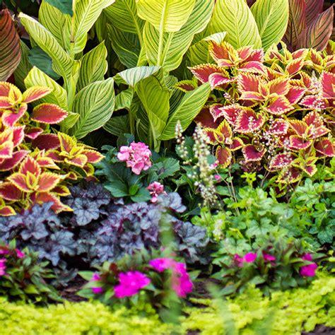 one weekend shade garden plans