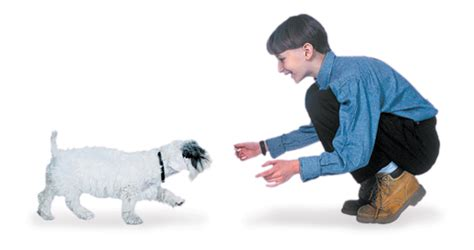 teaching a puppy to come teach your puppy these 5 basic commands american kennel club