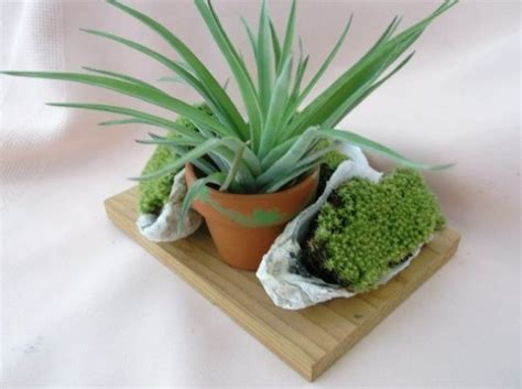 small house plant air plants for tiny houses by linda branch