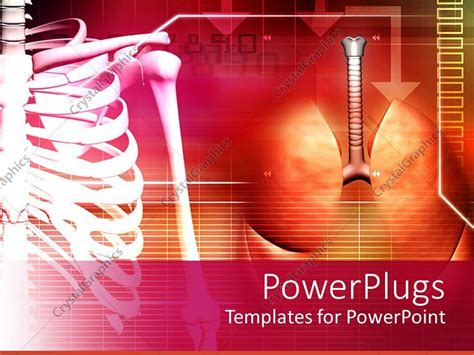 powerpoint themes lungs powerpoint template medical theme with human spine and