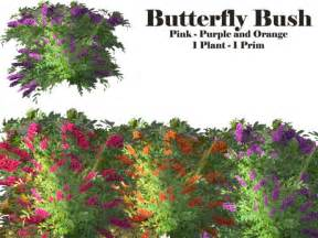 multi colored butterfly bush second marketplace butterfly bush multi color