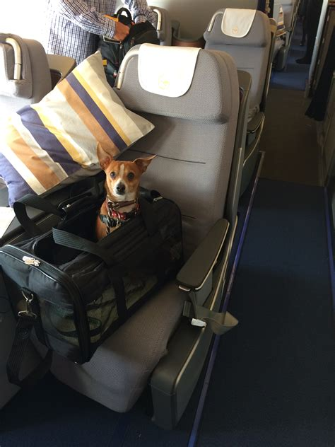 in cabin pet travel canine educationdog travel canine education