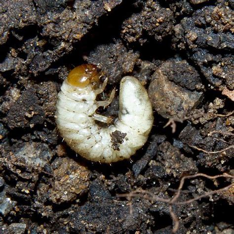 Gardening Forums by Worms In The Soil Gardening Forums