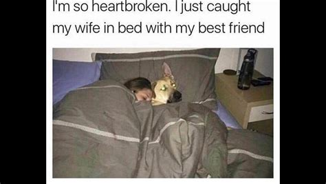 Animal In Bed Meme - the funny images thread general discussion forums page 348