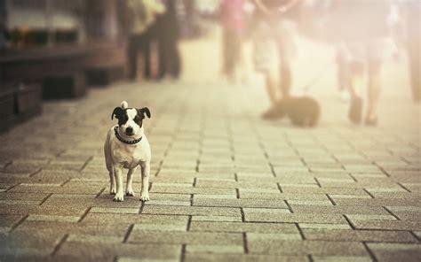 city dog street sunlight pet wallpapers hd desktop
