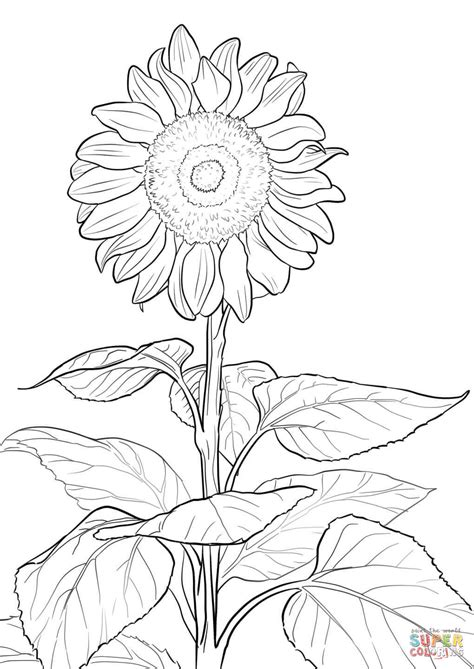 sunflower coloring page free printable coloring pages