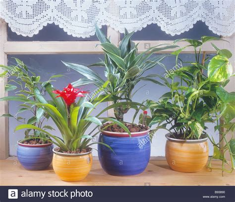 different indoor plants on window sill stock photo