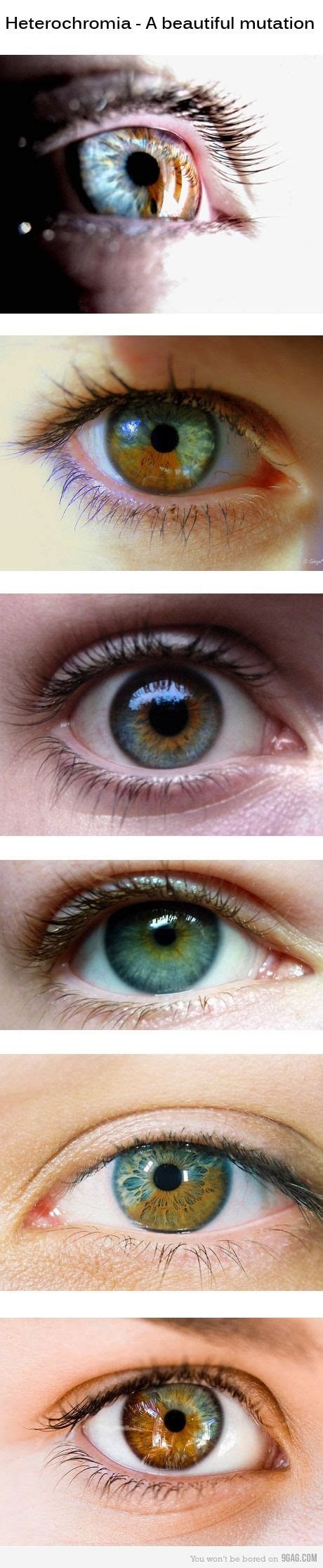 two different colored meaning blue green eye color meaning www imgkid the image