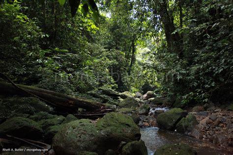 amazon indonesia indonesian rainforest slideshow rainforest in sumatra