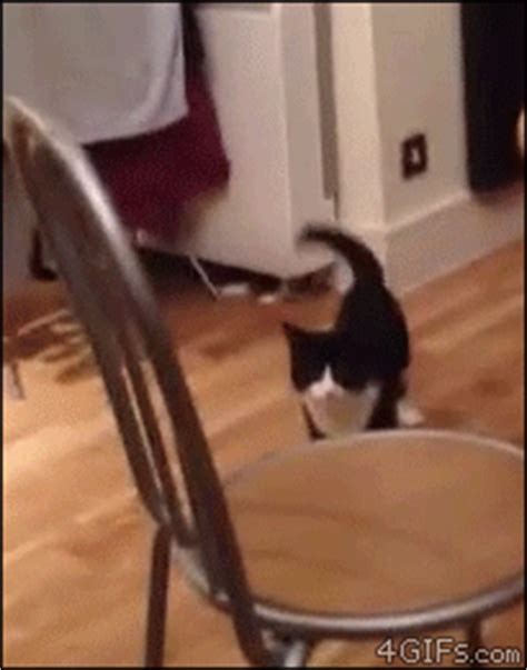sock cat gif gif of the day hop along socks on an octopus