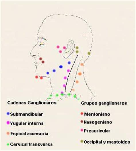cadenas ganglionares cara c 225 ncer oral