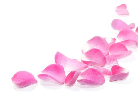 flower petals water hd wallpaper 1814076 petals hd wallpapers