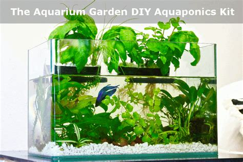 Grow Herbs In Kitchen by Aquaponics Kitchen Garden Self Cleaning Fish Tank Grows