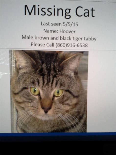 design poster lost cat missing in stafford springs ct please share contact