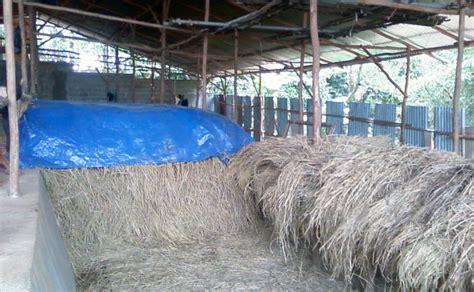 Jerami Padi Jerami Kering Siap Pakai pakan untuk sapi dan kambing by agribisnis indonesia