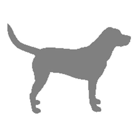 galliprant for dogs veterinary medicine therapeutic pipeline