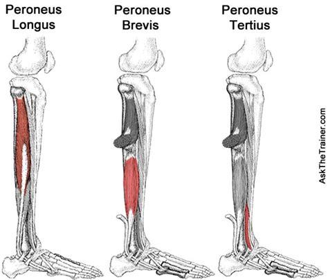 below knee utation musculus peroneus tertius med kom