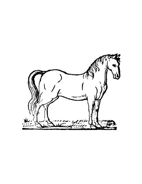 horse coloring pages online free free printable horse coloring pages for kids
