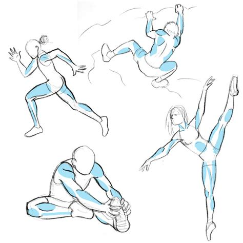 Drawing Human Anatomy by Human Anatomy Fundamentals Muscles And Other Mass