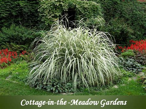 cottage in the meadow gardens
